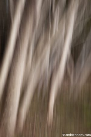 Forest and Trees 7 (ABS)