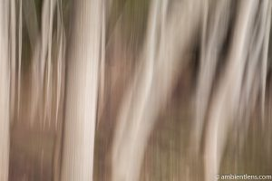 Forest and Trees 5 (ABS)