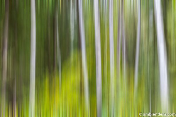 Forest and Trees 4 (ABS)
