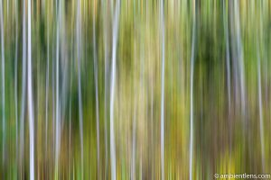 Forest and Trees 3 (ABS)
