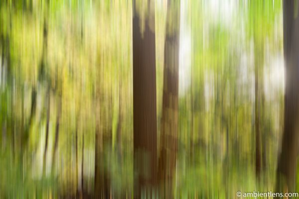 Forest and Trees 1 (ABS)
