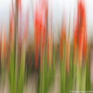 Orange Flowers 3 (ABS SQ)