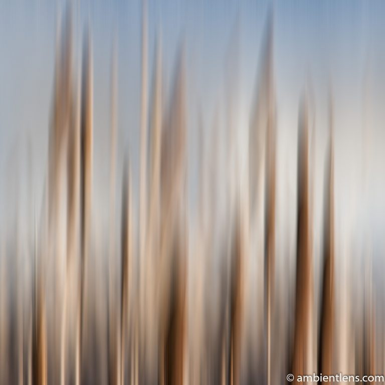 Willows (ABS SQ)