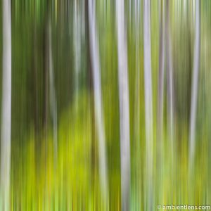 Forest and Trees 4 (ABS SQ)