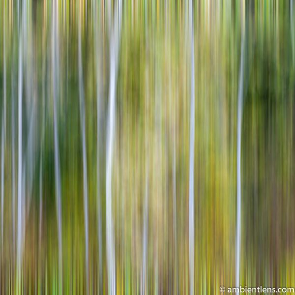 Forest and Trees 3 (ABS SQ)