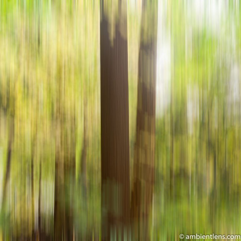 Forest and Trees 1 (ABS SQ)