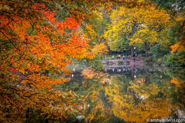 Autumn at the Pond in Central Park 1