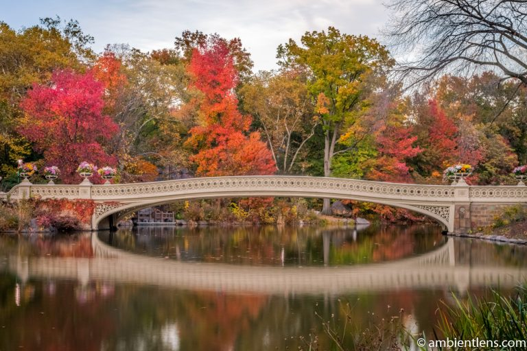 Bow Bridge in the Fall 3