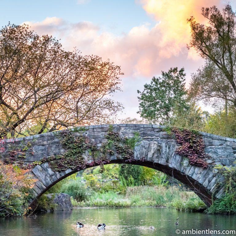 Gapstow Bridge and The Pond 2 (SQ)