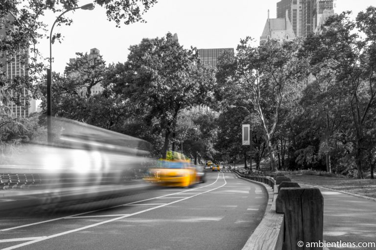 Yellow Cabs in Central Park, New York 3