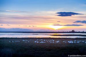 Iona Beach Birds and Jetty