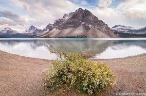 Bow Lake, Jasper, Alberta 2