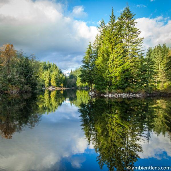Rice Lake Reflection (SQ)