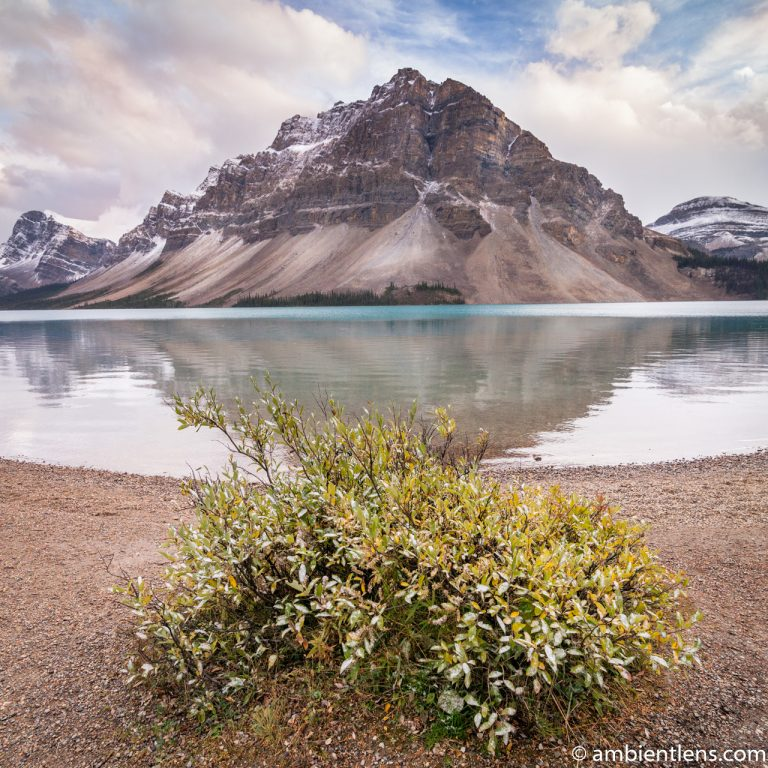 Bow Lake, Jasper, Alberta 2 (SQ)