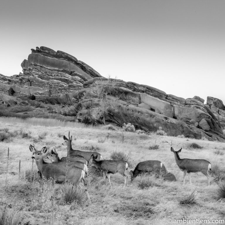 Deer and Red Rocks (BW SQ)