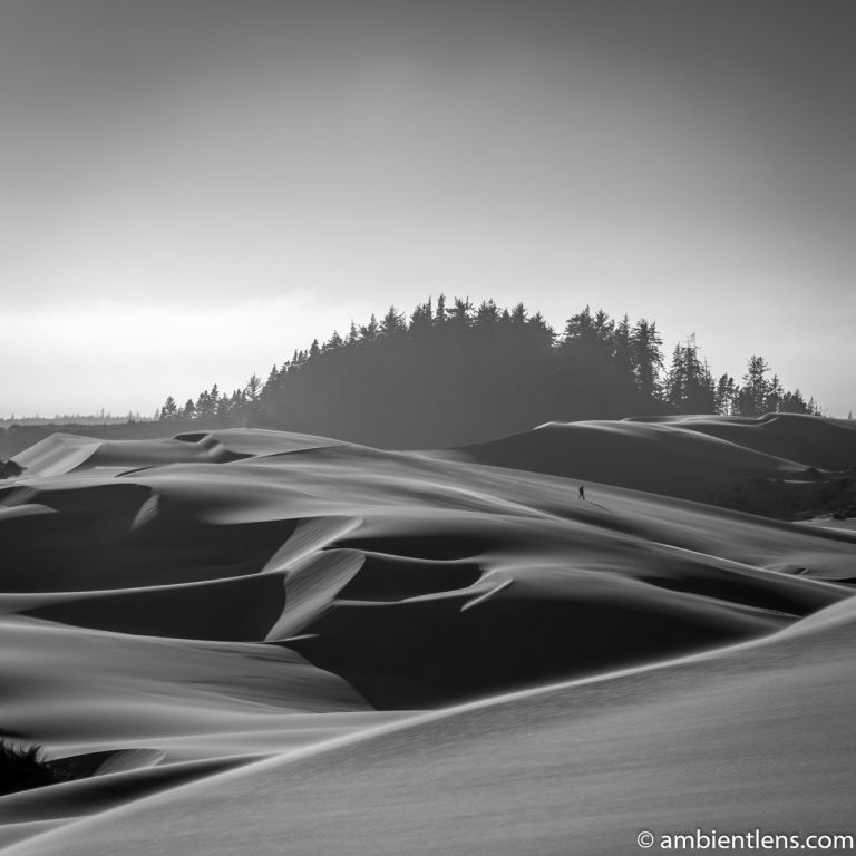 Crossing the Sand Dunes 2 (BW SQ)