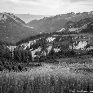 Wild Flowers Among the Mountains of Washington (BW SQ)