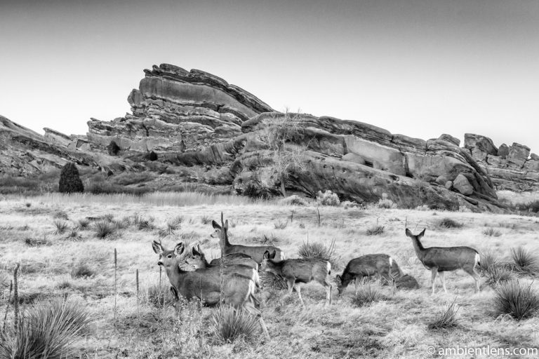 Deer and Red Rocks (BW)
