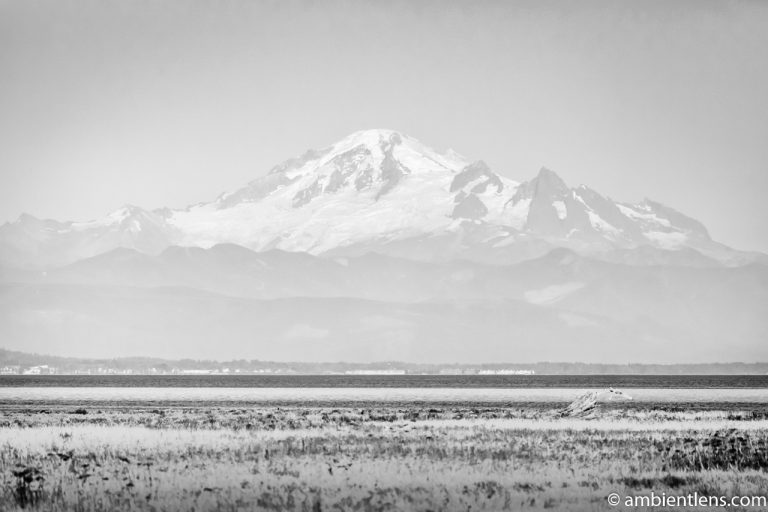 Mount Baker, Washington, USA (BW)
