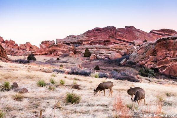 Deer Feeding at Sunset