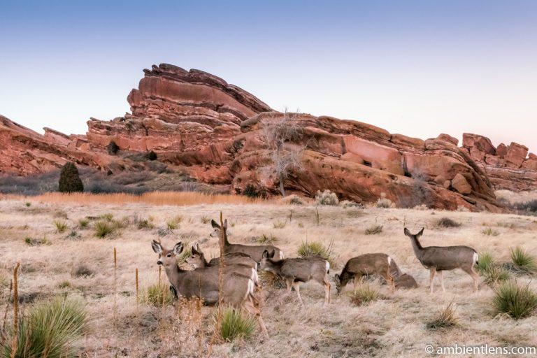 Deer and Red Rocks