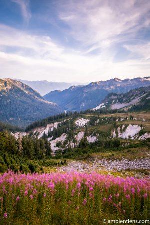 Wild Flowers Among the Mountains of Washington
