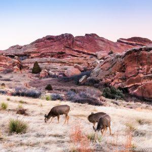 Deer Feeding at Sunset (SQ)