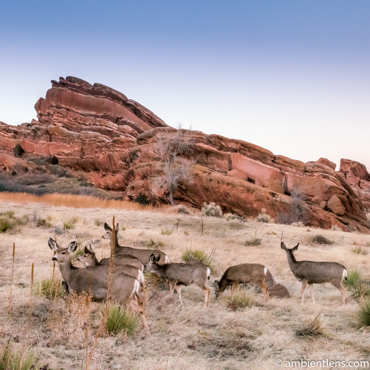Deer and Red Rocks (SQ)